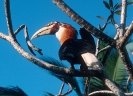 Birds_25