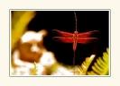 Dragonflies_10