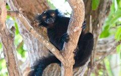 lemur_madagascar.jpg